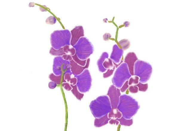 Slik får du orkideer til å blomstre på ny